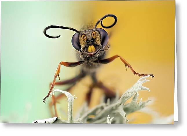 Hornet Head Greeting Card by Nicolas Reusens