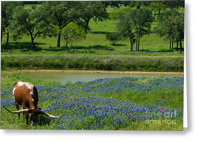 Horns And Bluebonnets Greeting Card