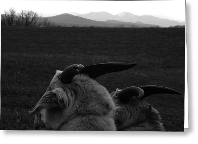 Horns And Hills Greeting Card