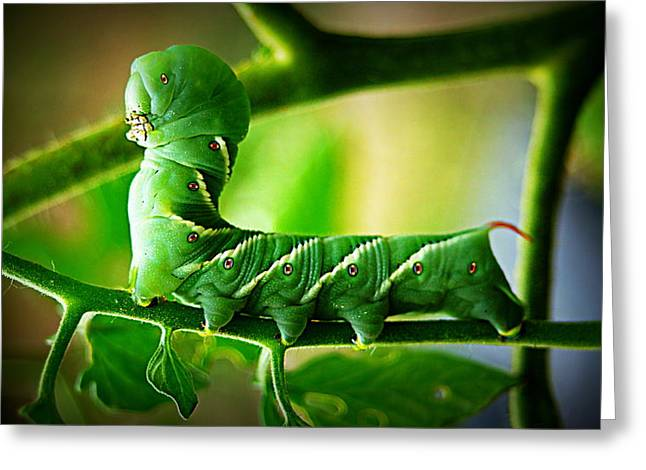 Hornworm Greeting Card by Paul  Wilford