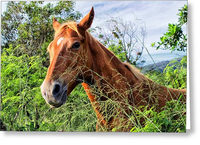 Greeting Card featuring the photograph Horse 1 by Dawn Eshelman