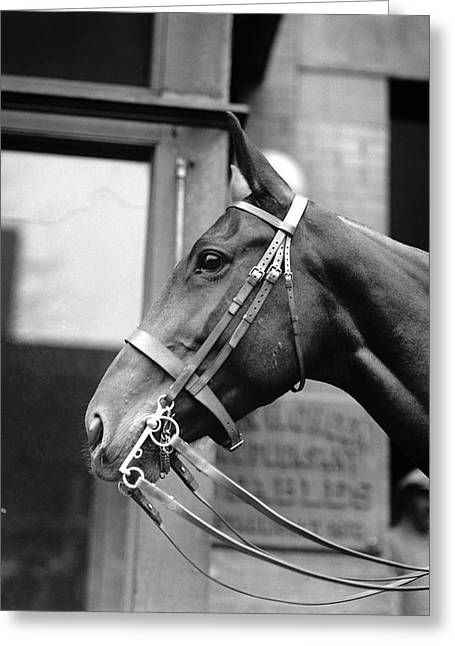 Horse, 1921 Greeting Card by Granger