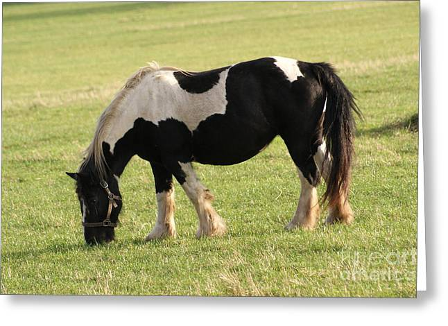 Horse 2 Greeting Card