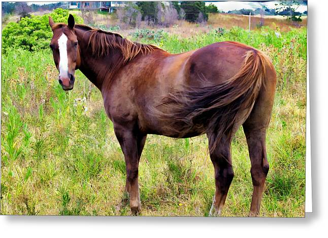 Greeting Card featuring the photograph Horse 5 by Dawn Eshelman