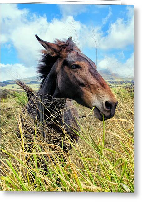 Greeting Card featuring the photograph Horse 6 by Dawn Eshelman