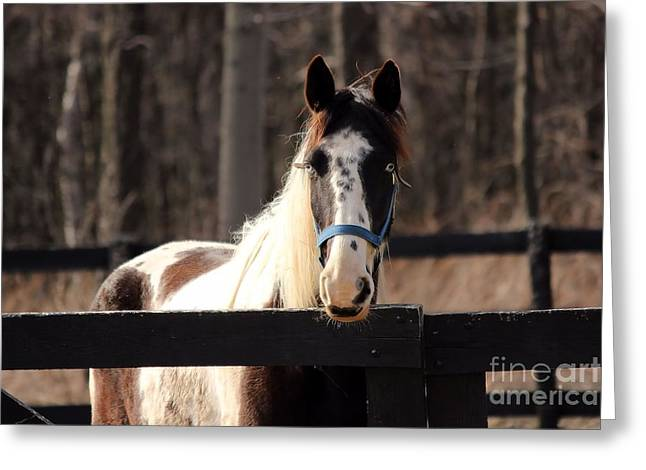 Horse At The Gate Greeting Card