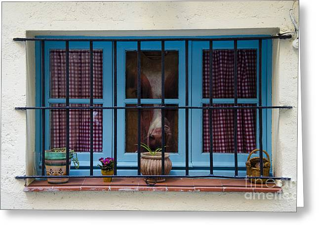 Horse Behind The Window Greeting Card by Victoria Herrera