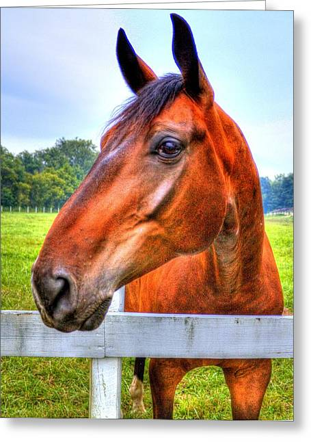 Horse Closeup Greeting Card by Jonny D