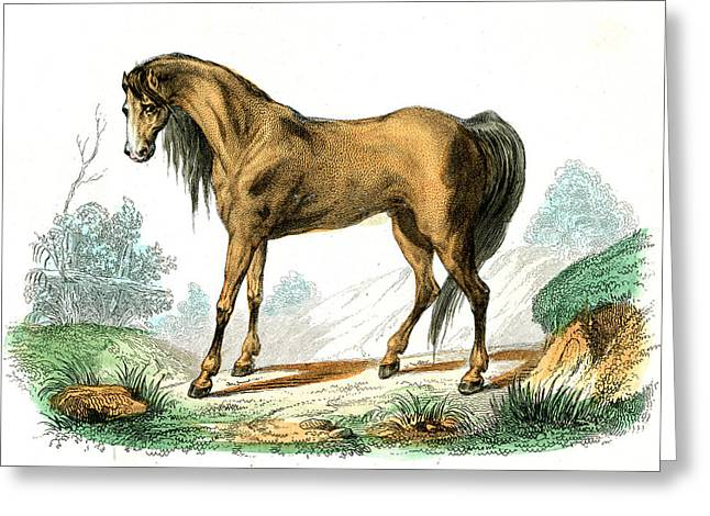 Horse Greeting Card by Collection Abecasis