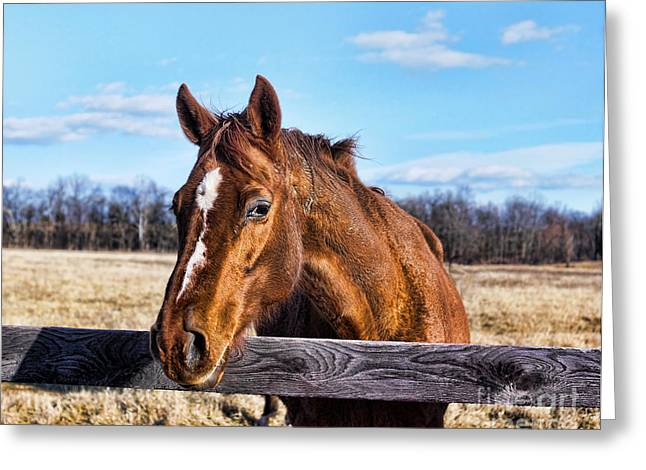 Horse Country Greeting Card by B Wayne Mullins