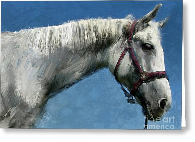 Horse  Greeting Card by Daliana Pacuraru