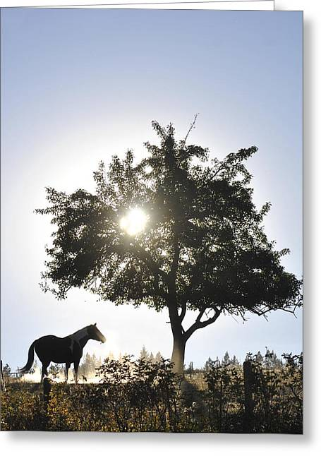 Horse Dreaming Under Tree Greeting Card