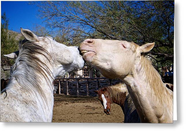 Horse Emotion Greeting Card