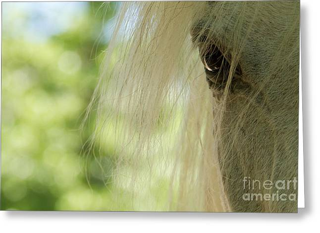 Horse Eye Greeting Card by Christine Sponchia