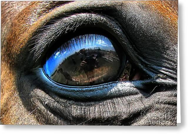 Horse Eye Greeting Card by Daliana Pacuraru
