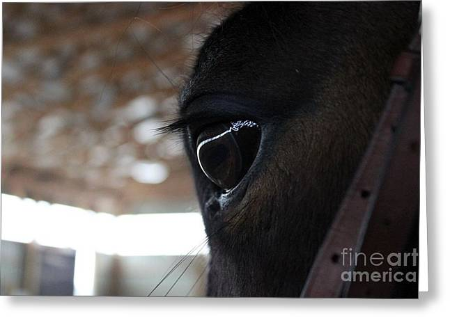 Horse Eye From Behind Greeting Card