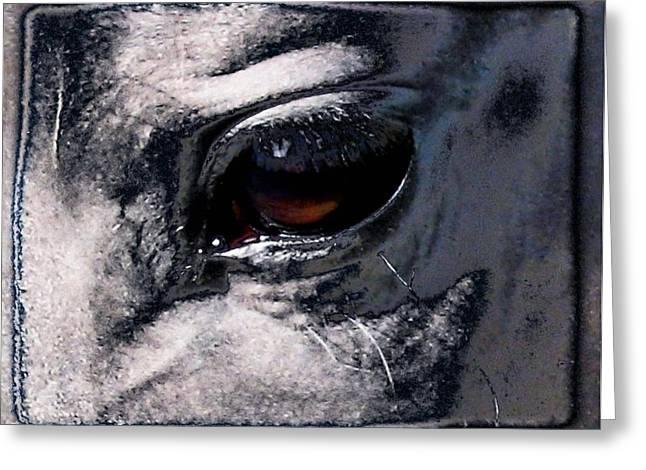 Horse Eye Greeting Card by Gun Legler