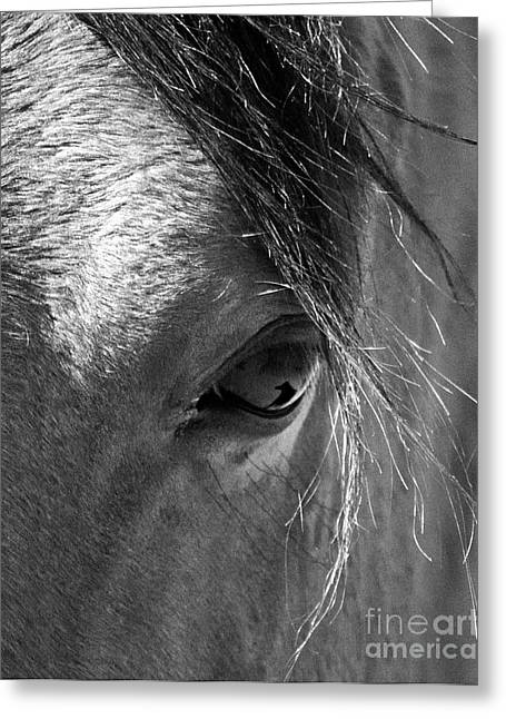 Horse Eye In Black And White Greeting Card
