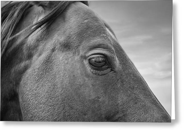 Horse Eye Greeting Card by Leland D Howard