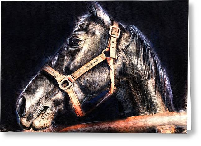 Horse Face - Pencil Drawing Greeting Card