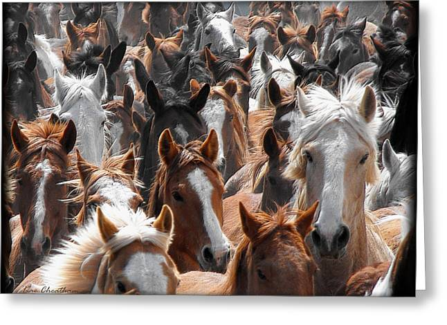 Horse Faces Greeting Card