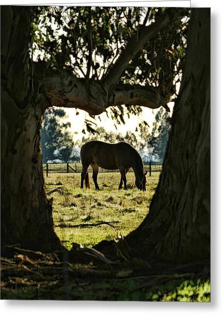 Horse Grazing Greeting Card by Blake Richards