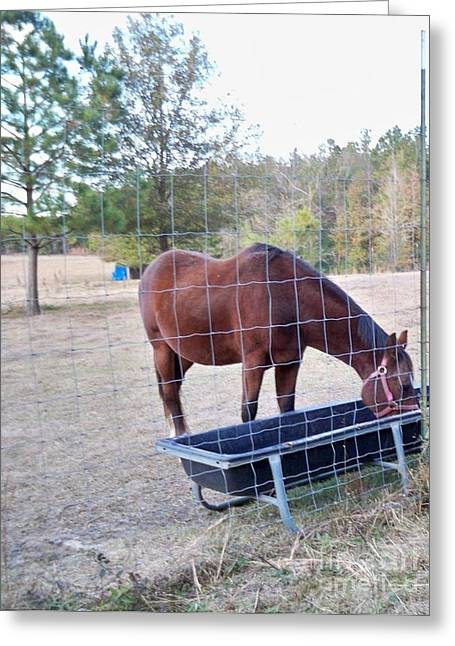 Horse Grazing Greeting Card by Joseph Baril