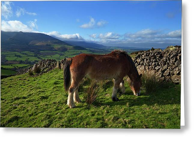 Horse Grazing On Croaghaun Greeting Card by Panoramic Images