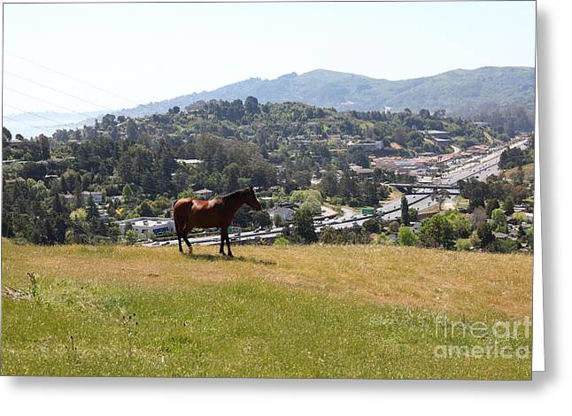 Horse Hill Mill Valley California 5d22662 Greeting Card by Wingsdomain Art and Photography