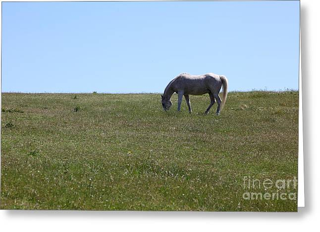 Horse Hill Mill Valley California 5d22664 Greeting Card by Wingsdomain Art and Photography