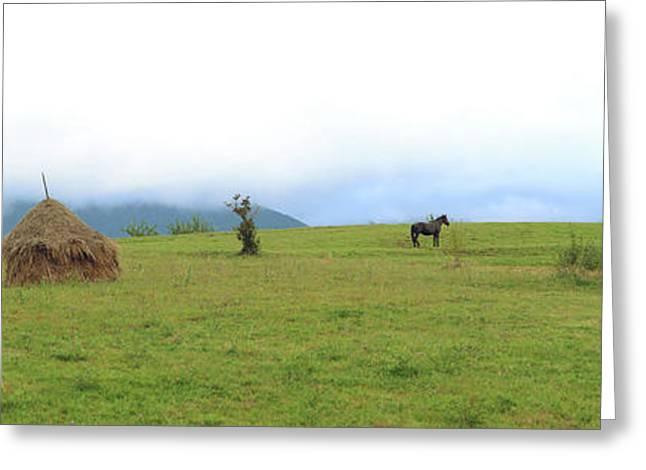 Horse In A Field, Bran, Brasov County Greeting Card by Panoramic Images
