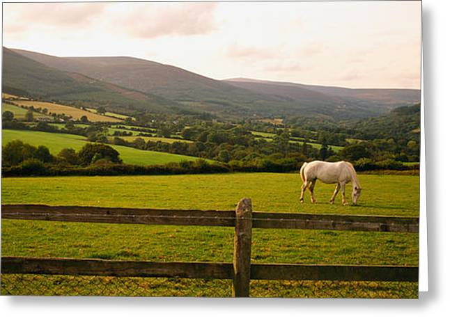 Horse In A Field, Enniskerry, County Greeting Card by Panoramic Images