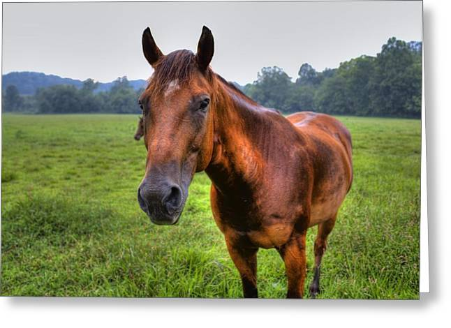 Horse In A Field Greeting Card by Jonny D