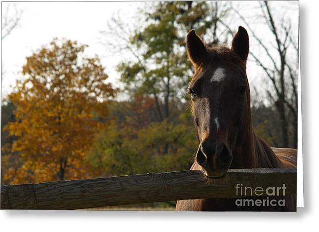 Horse In Autumn Light Greeting Card by Anna Lisa Yoder