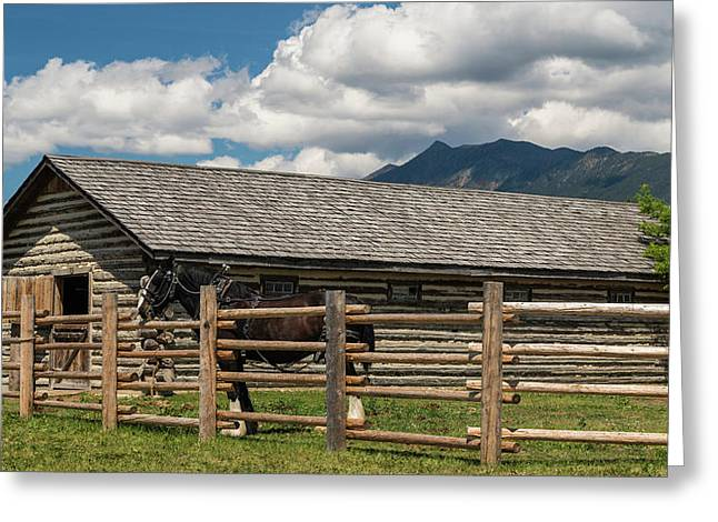 Horse In Barn, Rocky Mountains, Fort Greeting Card by Panoramic Images