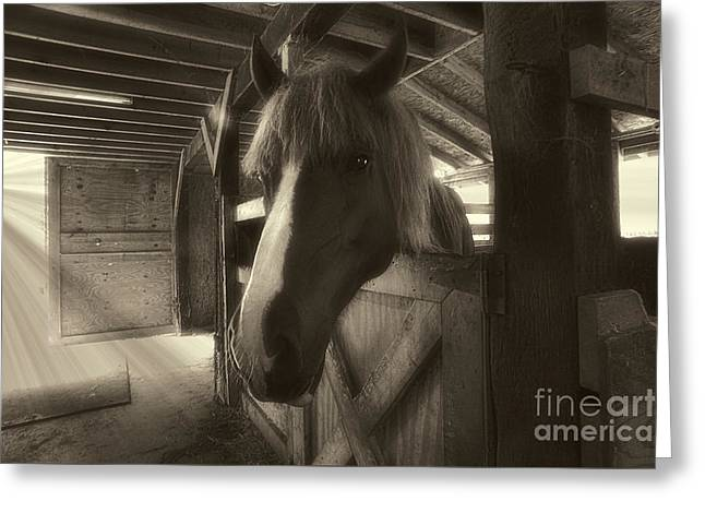 Horse In Barn Stall Greeting Card by Dan Friend