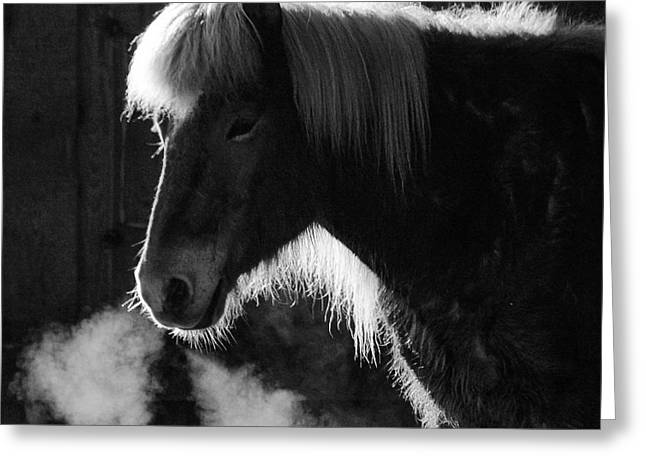 Horse In Black And White Square Format Greeting Card