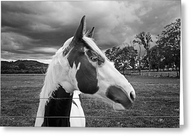 Horse In Black And White Greeting Card by Steven  Michael