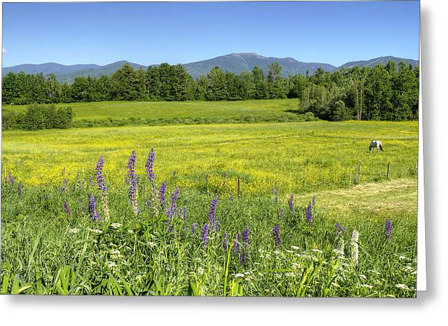 Horse In Buttercup Field Greeting Card