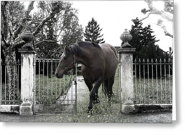 Horse In Europe Greeting Card