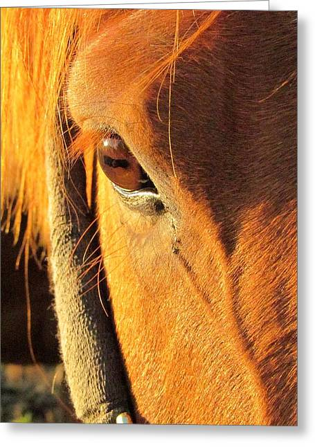 Horse In Sunset Greeting Card