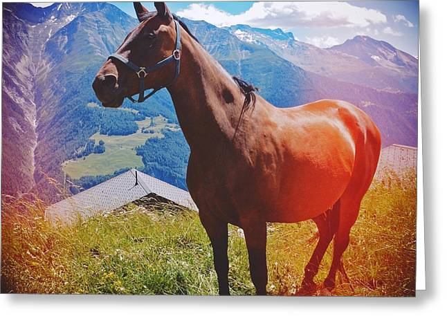 Horse In The Alps Greeting Card