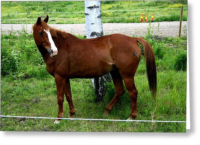 Horse In The Country Side Greeting Card