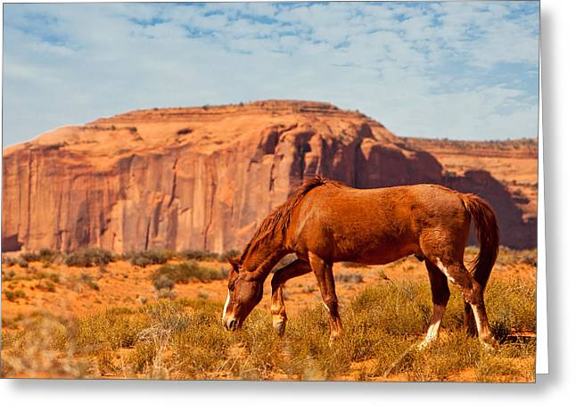 Horse In The Desert Greeting Card by Susan Schmitz