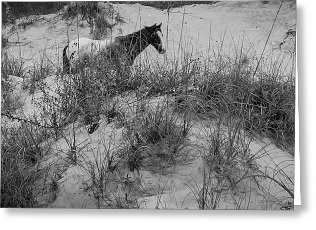 Horse In The Dunes Greeting Card