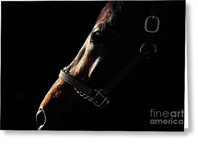 Horse In The Shadows Greeting Card
