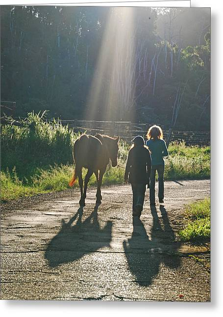 Horse In The Spotlight Greeting Card