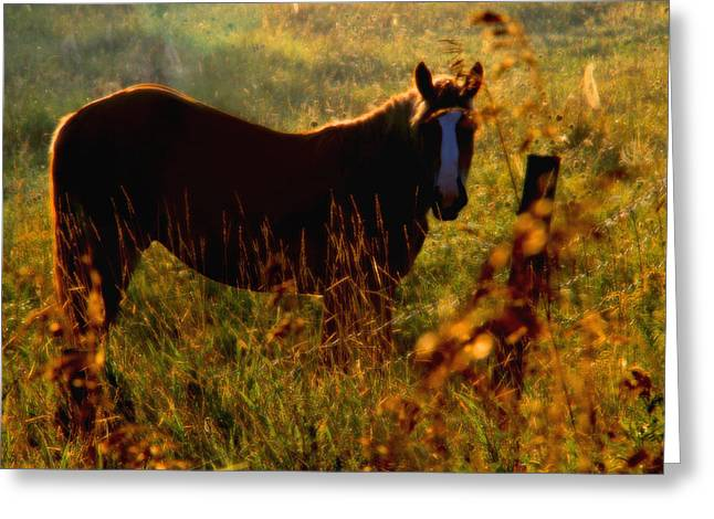 Horse Greeting Card by Jim Vance