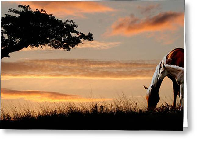 Horse Mare And A Foal Grazing By Tree Greeting Card