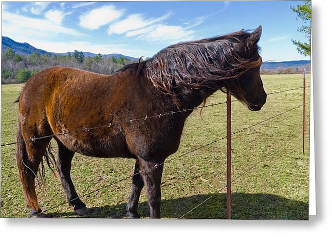 Horse Greeting Card by Melinda Fawver